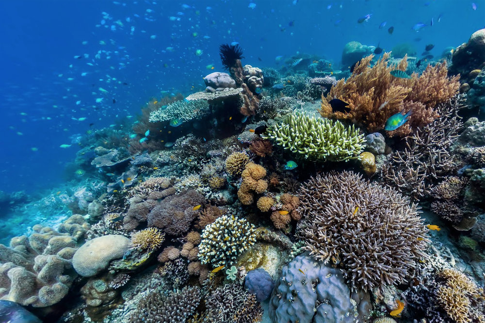 CORAL REEFS -