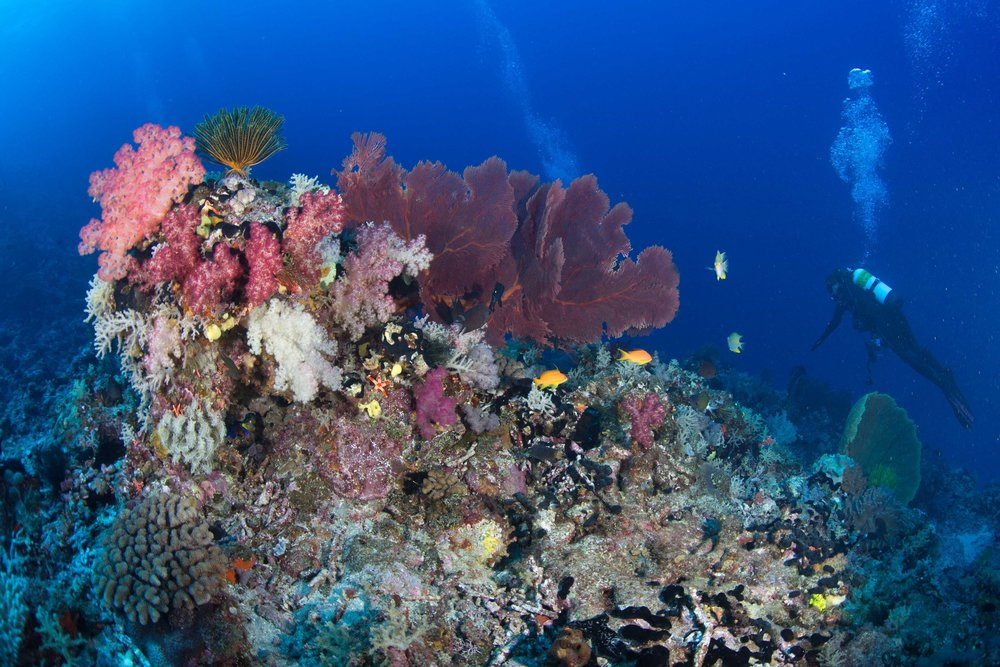 coral reef, indonesia cREDIT: JAYNE JENKINS
