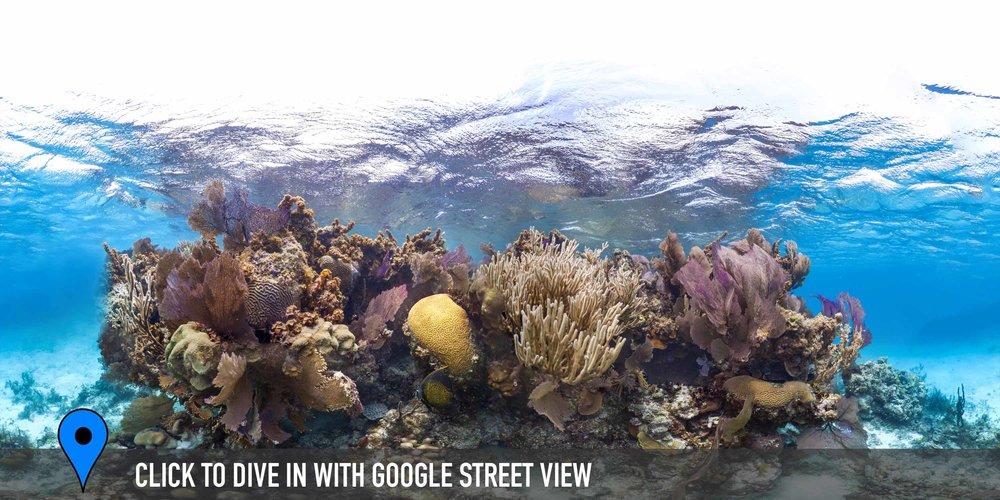 DOWNLOAD   - belize Credit: THE OCEAN AGENCY / XL CATLIN SEAVIEW SURVEY