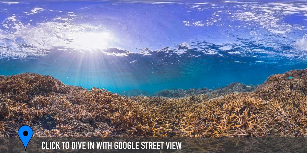 american samaoa Credit: THE OCEAN AGENCY / XL CATLIN SEAVIEW SURVEY