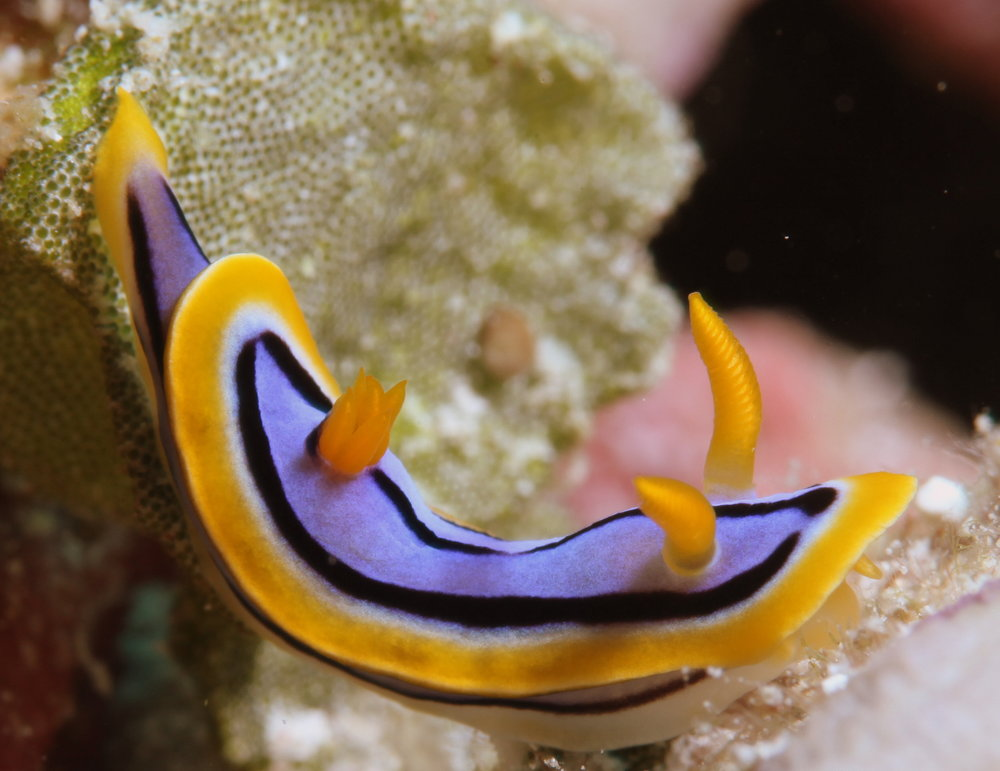 download   - SEA SLUG credit: JAYNE JENKINS