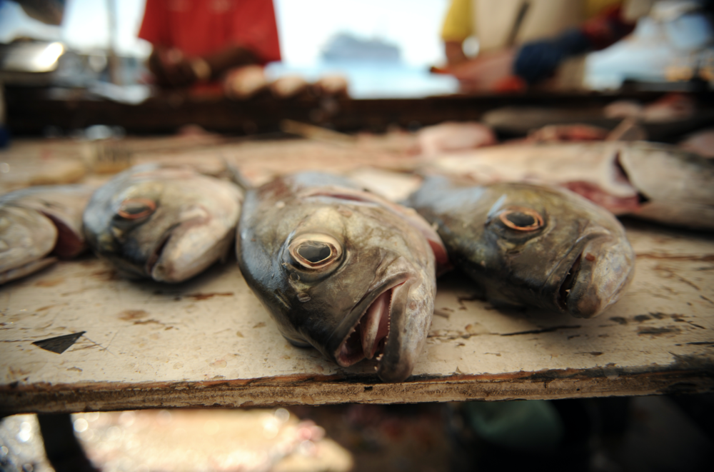 Fish in Market, Cayman Islands CREDIT: Michelle de Villiers