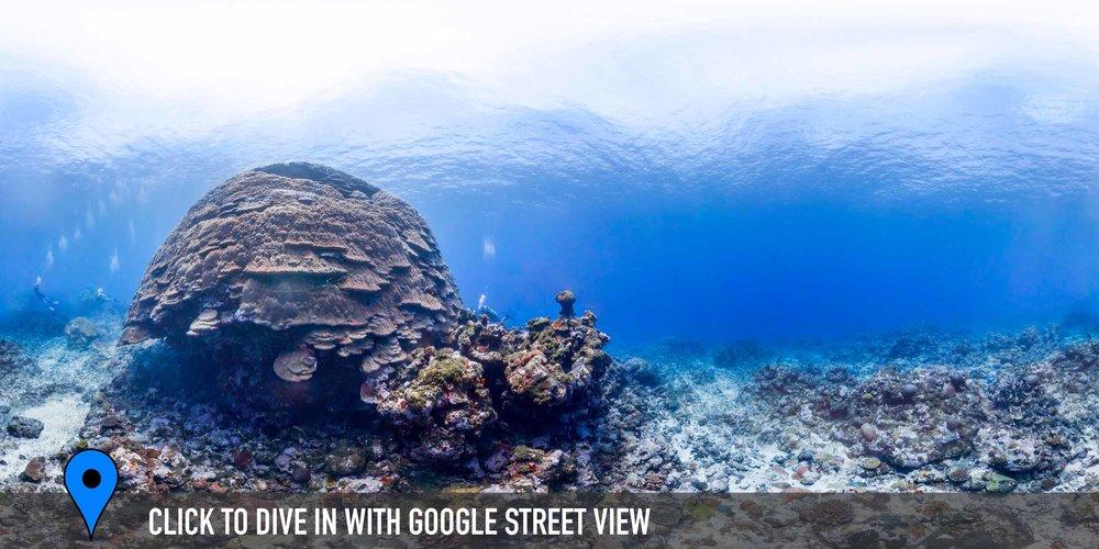 big momma, american samoa Credit: THE OCEAN AGENCY / XL CATLIN SEAVIEW SURVEY