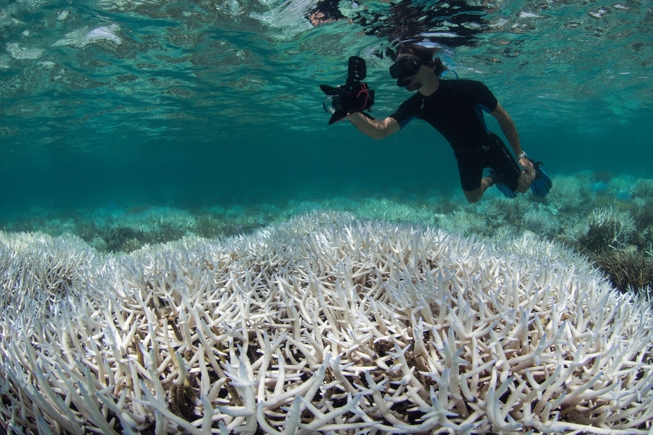 NEW CALEDONIA, AUSTRALIA, mar 2016 credit: the ocean agency / xl catlin seaview survey