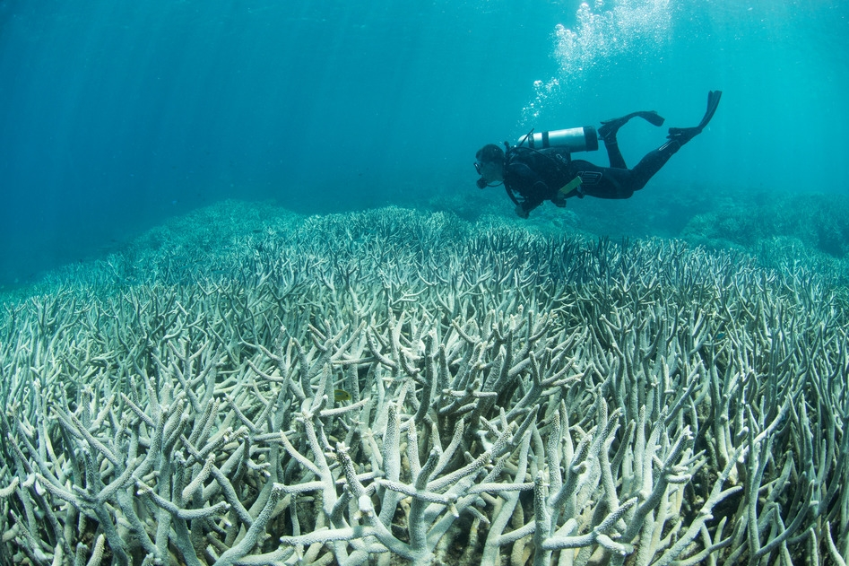 heron island, GREAT BARRIER REEF credit: the ocean agency / xl catlin seaview survey