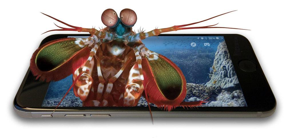 mantis+in+phone copy.jpg