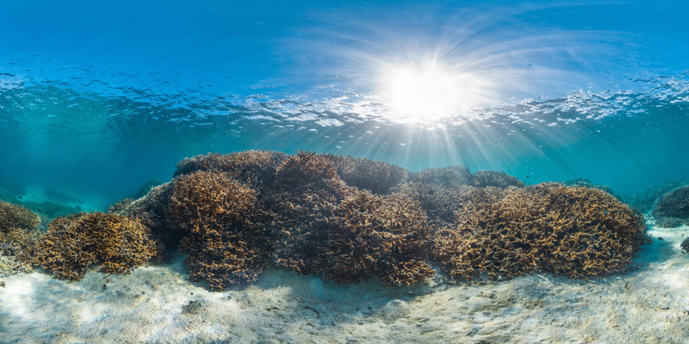 DOWNLOAD   - american samoa Credit: THE OCEAN AGENCY / XL CATLIN SEAVIEW SURVEY