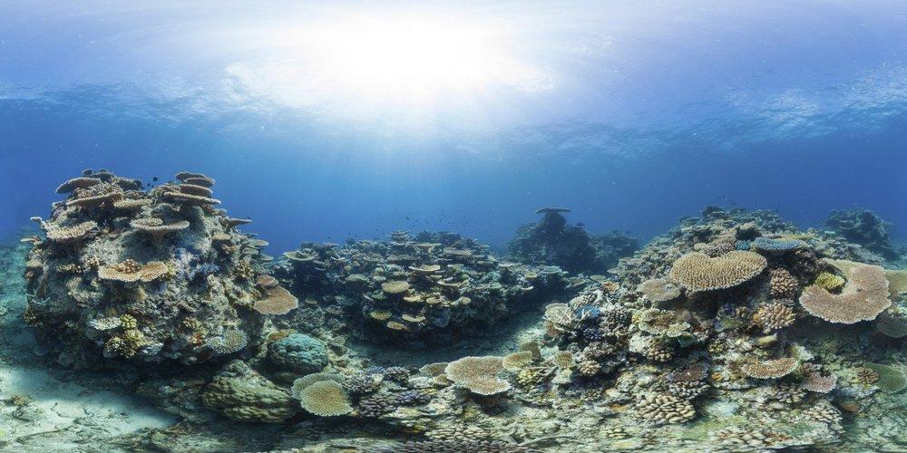wilson reef, great barrier reef Credit: THE OCEAN AGENCY / XL CATLIN SEAVIEW SURVEY