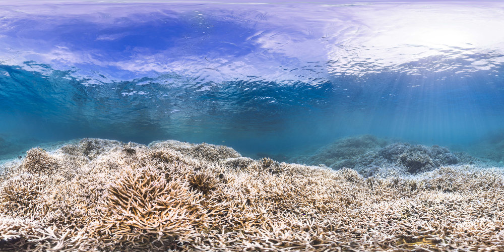american samoa, feb 2015 credit: THE OCEAN AGENCY / XL CATLIN SEAVIEW SURVEY