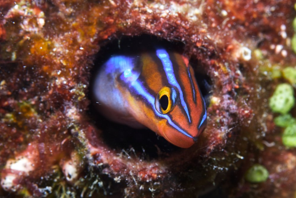 small fish on the reef CREDIT: THE OCEAN AGENCY/ coral reef image bank
