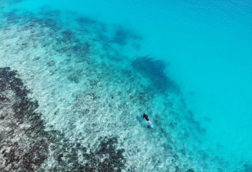 download   - SEYCHELLES credit: THE OCEAN AGENCY