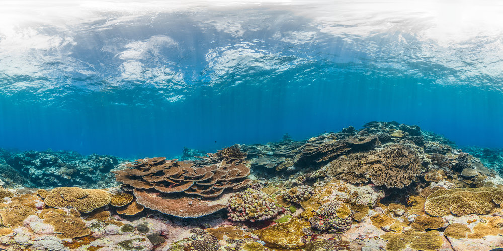 FOGAMA,AMERICAN SAMOA Credit: THE OCEAN AGENCY / XL CATLIN SEAVIEW SURVEY