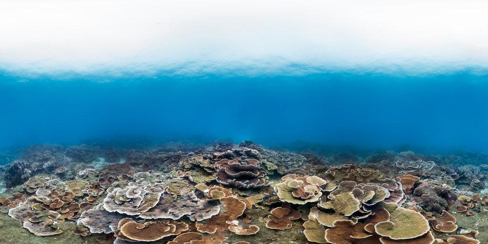 donghi harbor, taiwan Credit: THE OCEAN AGENCY / XL CATLIN SEAVIEW SURVEY
