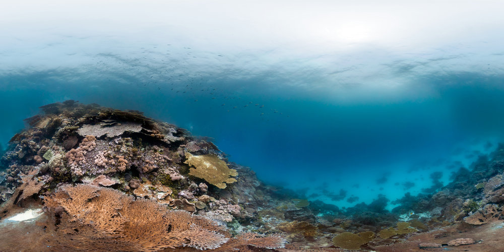 Moresby Island (Inside), CHAGOS Credit: THE OCEAN AGENCY / XL CATLIN SEAVIEW SURVEY