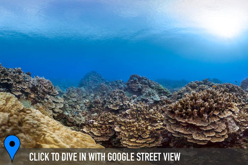 DOWNLOAD   - pue coral gardens, cook islands Credit: THE OCEAN AGENCY / XL CATLIN SEAVIEW SURVEY