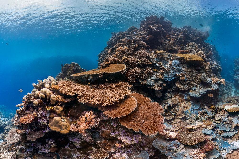palau Credit: THE OCEAN AGENCY / 50REEFS