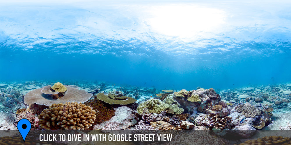 NELSON ISLAND (OUTSIDE), CHAGOS Credit: THE OCEAN AGENCY / XL CATLIN SEAVIEW SURVEY