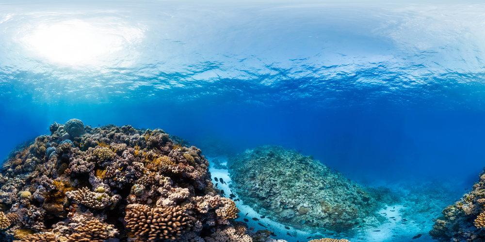 ribbon reef 5, great barrier reef Credit: THE OCEAN AGENCY / XL CATLIN SEAVIEW SURVEY