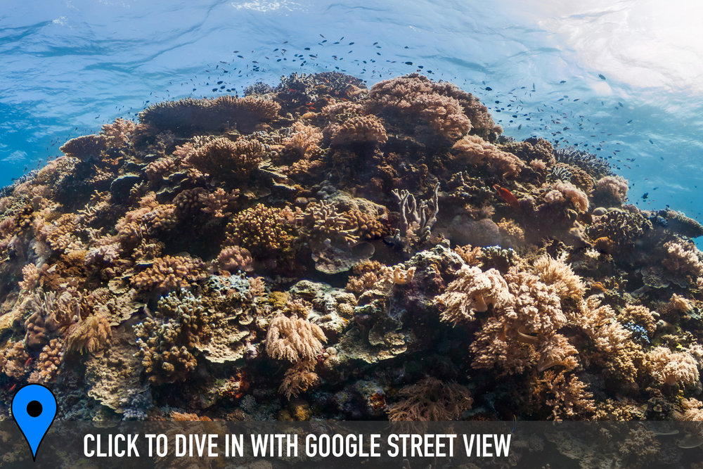essie beazley reef, philippines Credit: THE OCEAN AGENCY / XL CATLIN SEAVIEW SURVEY