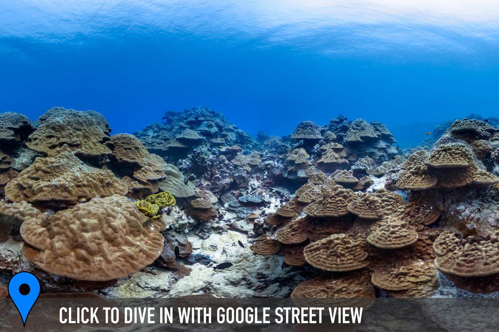 BLACK ROCK CHIMNEYS, COOK ISLANDS Credit: THE OCEAN AGENCY / XL CATLIN SEAVIEW SURVEY