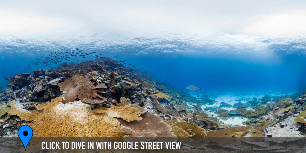 Ile Vache Marine, CHAGOS Credit: THE OCEAN AGENCY / XL CATLIN SEAVIEW SURVEY