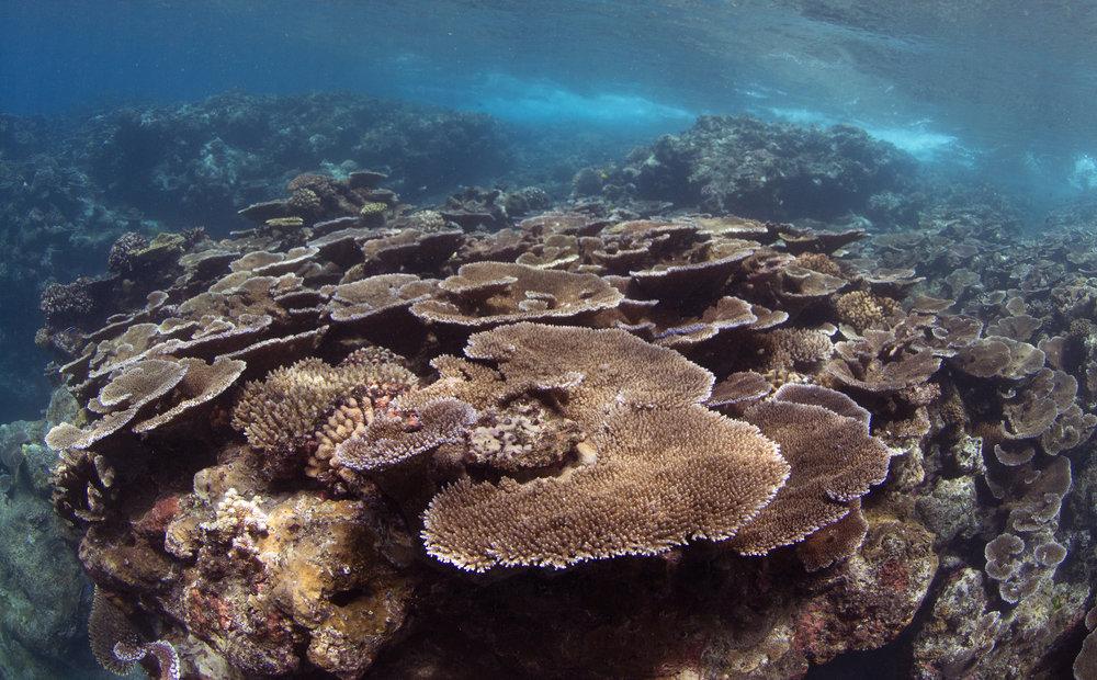 fagatele bay, american samoa Credit: THE OCEAN AGENCY