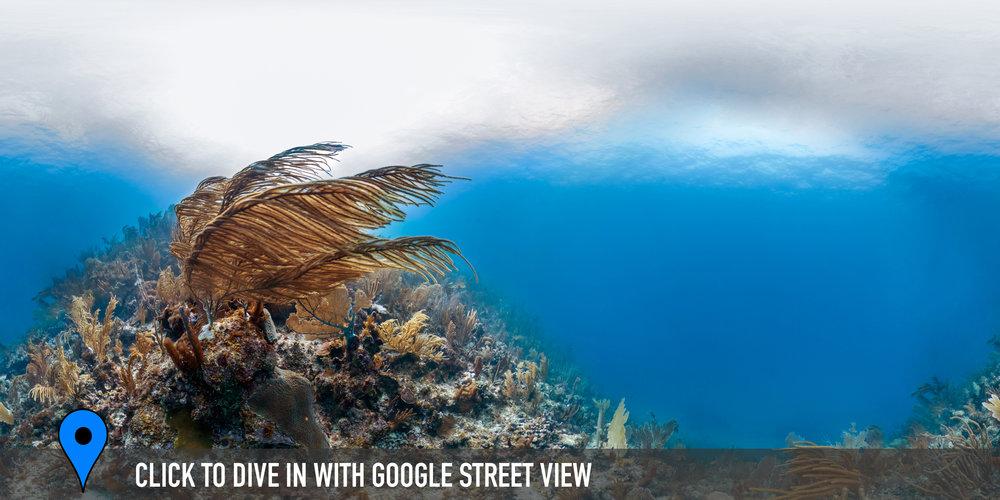 SHOAL BAY, ANGUILLA Credit: THE OCEAN AGENCY / XL CATLIN SEAVIEW SURVEY