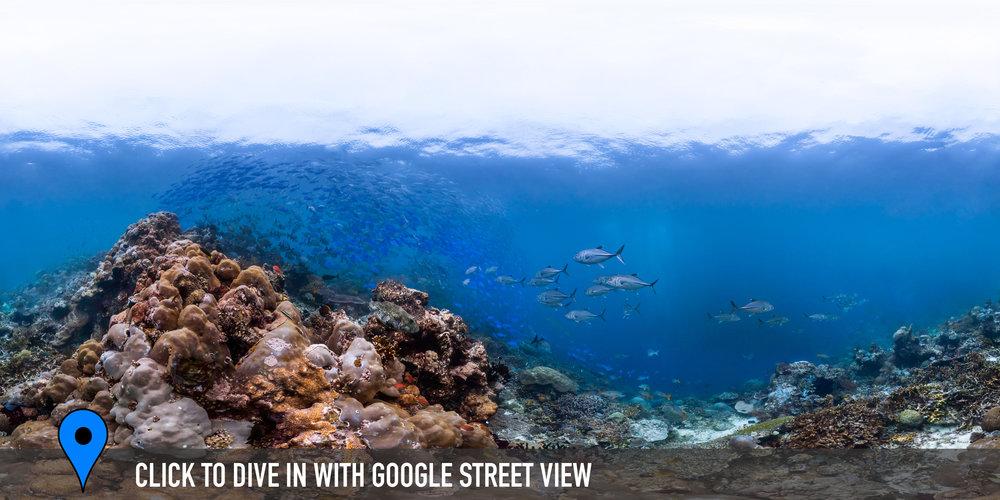 CAPE KRI,indonesia Credit: THE OCEAN AGENCY / XL CATLIN SEAVIEW SURVEY