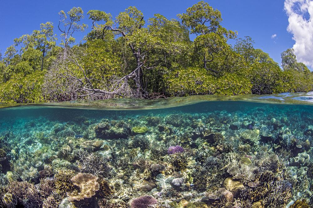 DOWNLOAD   -Yanggefo Island, Raja Ampat Credit: Alex mustard