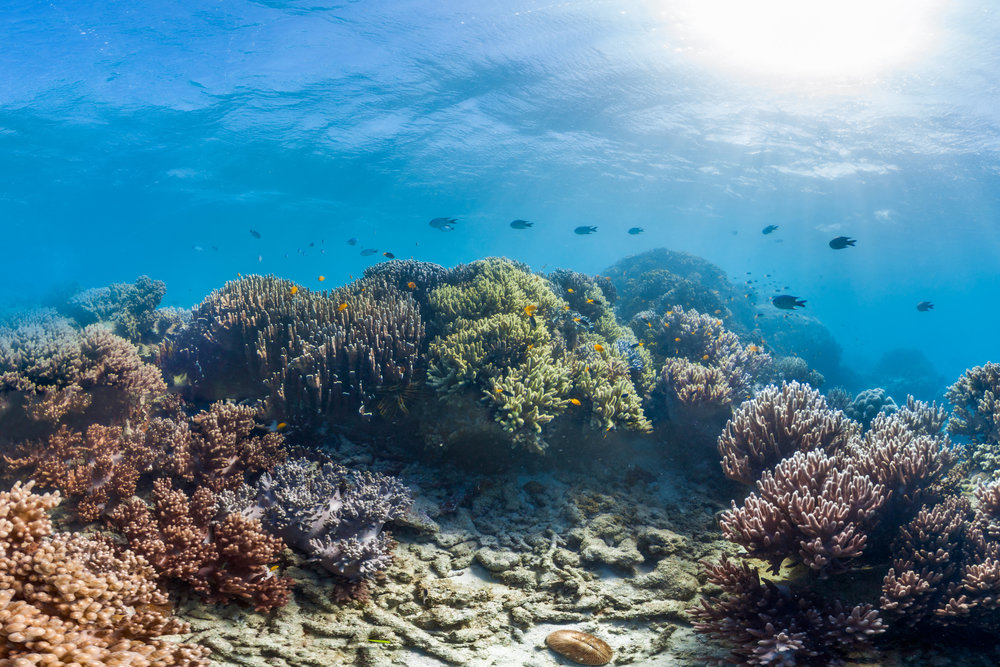 DOWNLOAD   - LIZARD ISLAND, australia Credit: THE OCEAN AGENCY / XL CATLIN SEAVIEW SURVEY