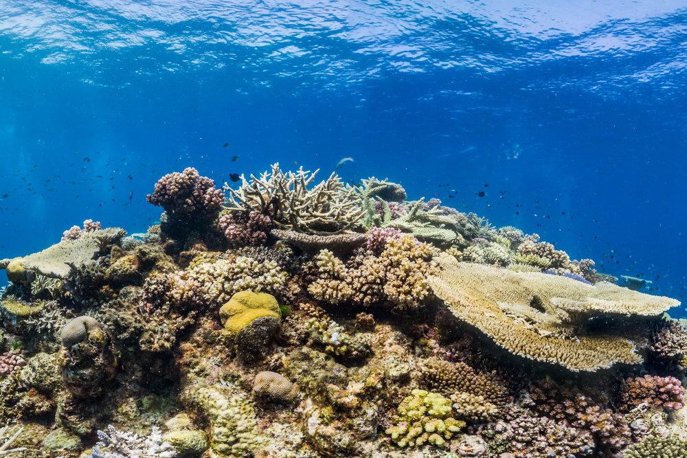 ORION REEF, australia Credit: THE OCEAN AGENCY / XL CATLIN SEAVIEW SURVEY