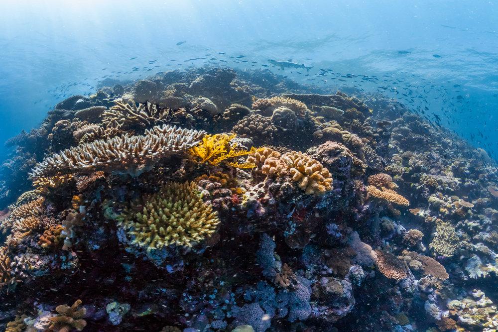 NORTH BROKEN PASSAGE, australia Credit: THE OCEAN AGENCY / XL CATLIN SEAVIEW SURVEY