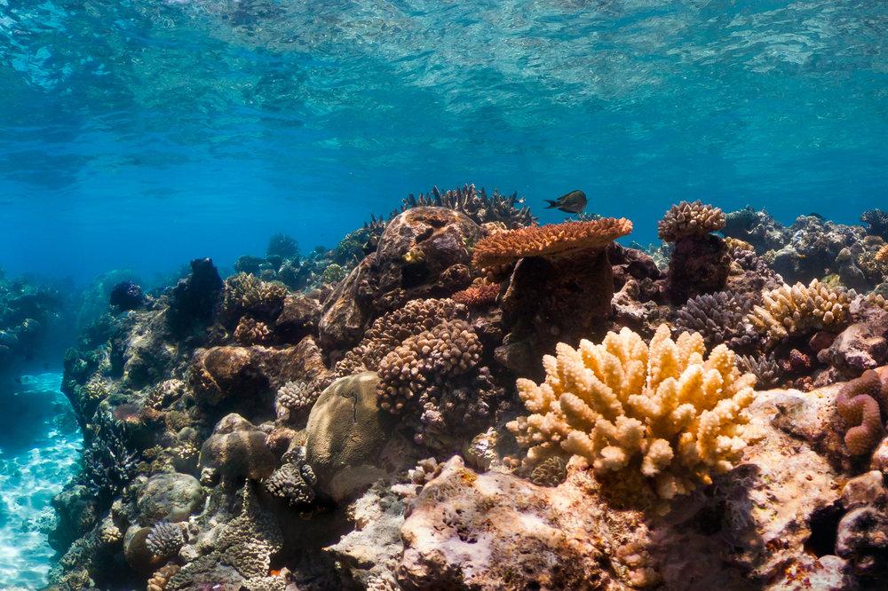 OSPREY REEF, australia Credit: THE OCEAN AGENCY / XL CATLIN SEAVIEW SURVEY