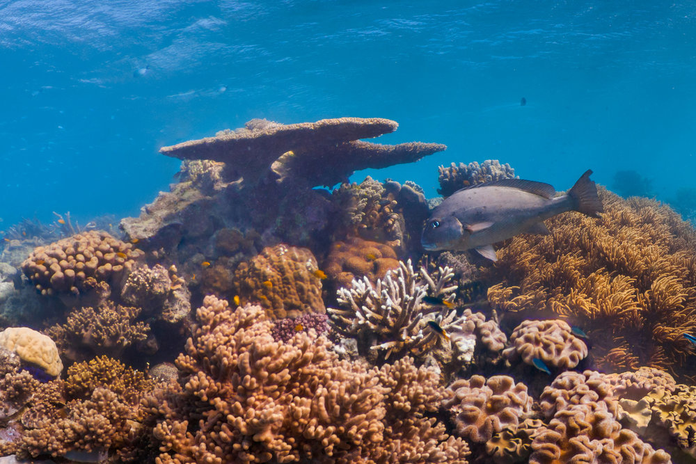 lizard island, australia Credit: THE OCEAN AGENCY / XL CATLIN SEAVIEW SURVEY