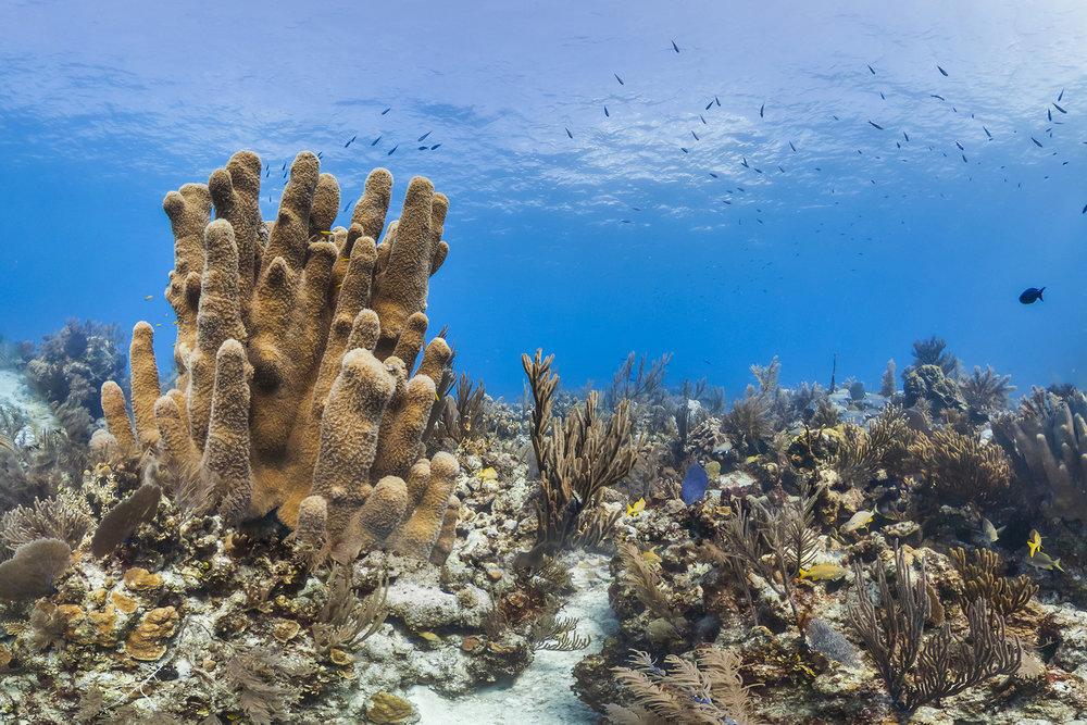 conception reserve, bahamas Credit: THE OCEAN AGENCY / XL CATLIN SEAVIEW SURVEY
