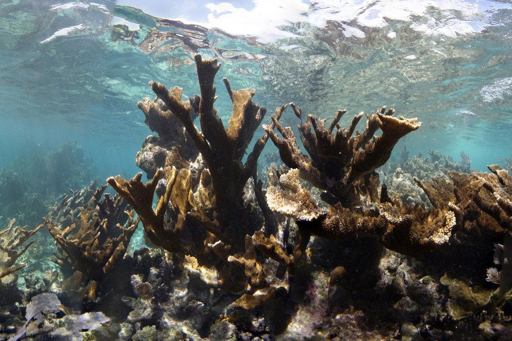 DOWNLOAD   - UTILA, HONDURAS Credit: THE OCEAN AGENCY / XL CATLIN SEAVIEW SURVEY
