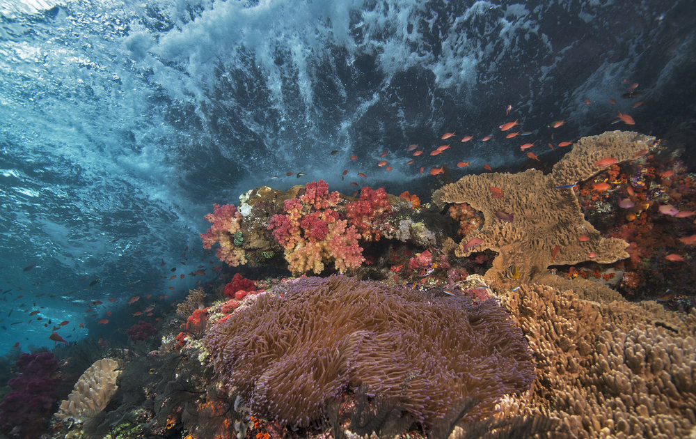 DOWNLOAD   - coral reef, indonesia credit: Jayne jenkins