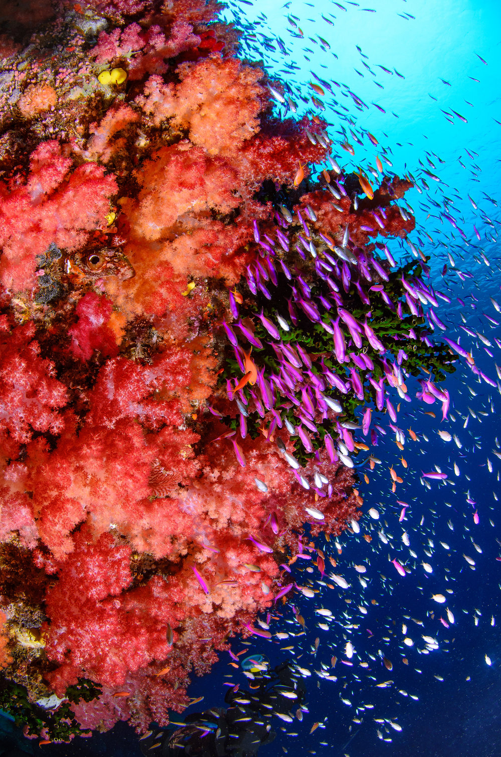 Taveuni, Fiji CREDIT: YEN-YI LEE