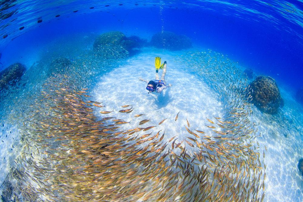 A SNORKELER in Lang Tengah Island,Malaysia CREDIT: YEN-YI LEe/ coral reef image bank