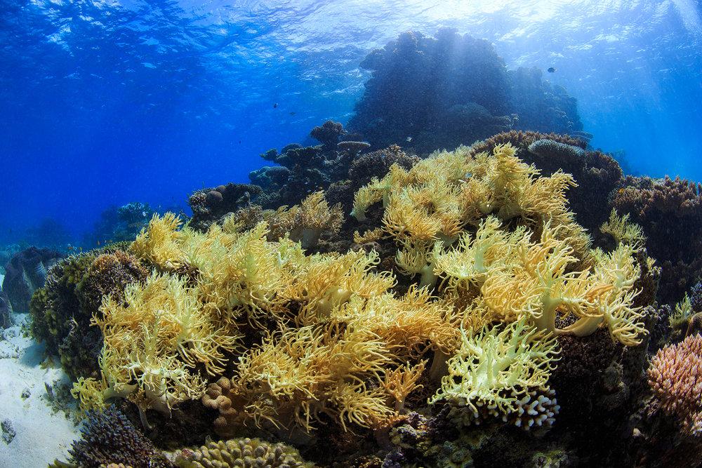 great barrier reef, australia CREDIT: YEN-YI LEE