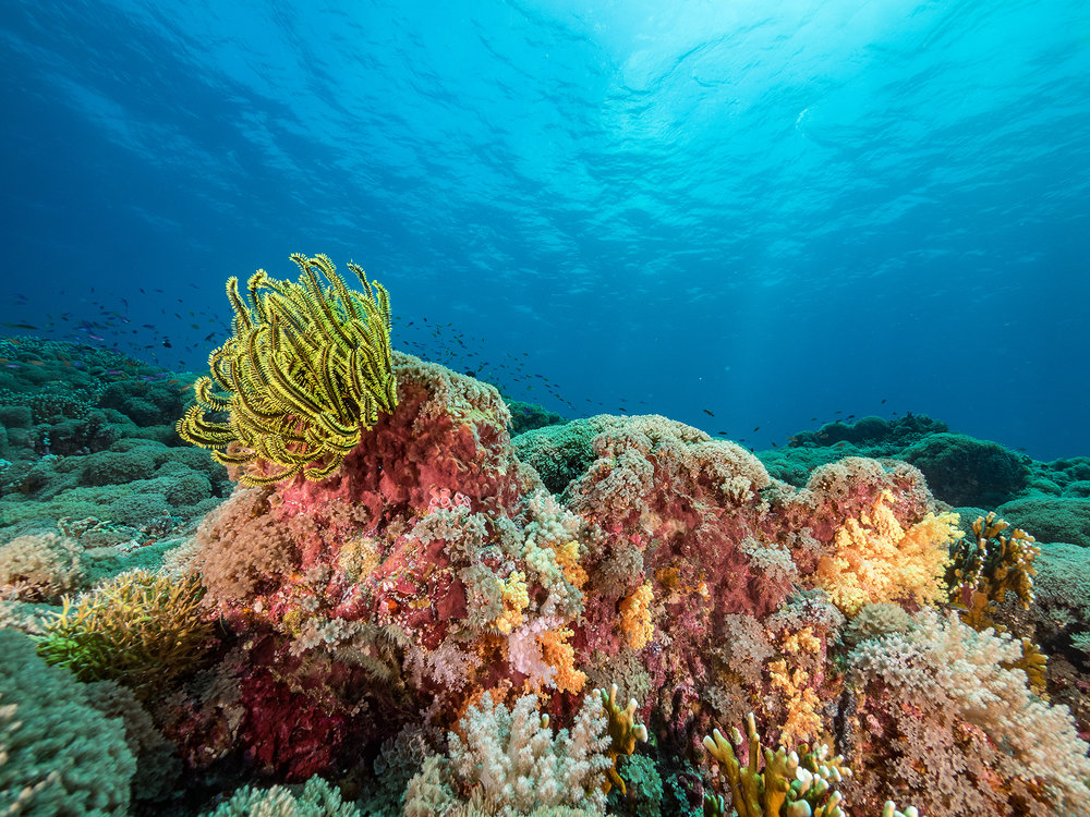 Tubbataha Reefs Natural Park, Philippines CREDIT: SIMON J. PIERCE