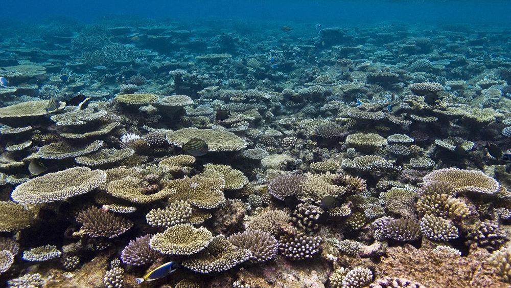 Gaafu Alifu Atoll,Maldives CREDIT: WARREN BAVERSTOCK