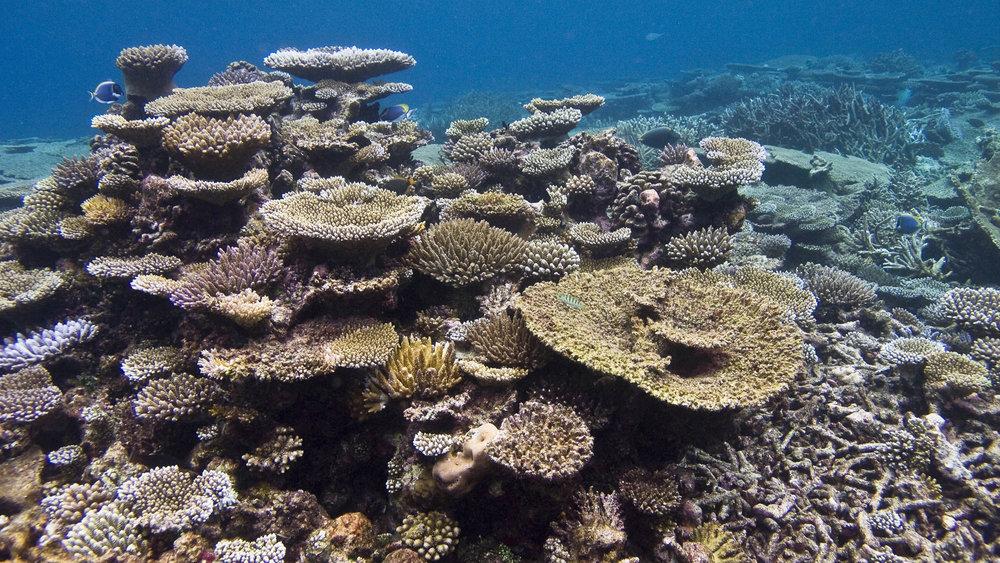 DOWNLOAD   -Gaafu Alifu Atoll,Maldives CREDIT: WARREN BAVERSTOCK