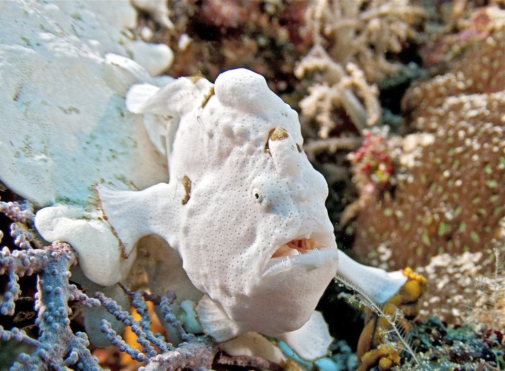 DOWNLOAD   - FROGFISH CREDIT: JAYNE JENKINS