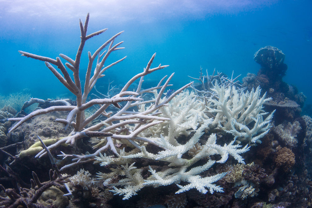 cairns, AUSTRALIA, mar 2016 credit: the ocean agency (christophe bailhache)