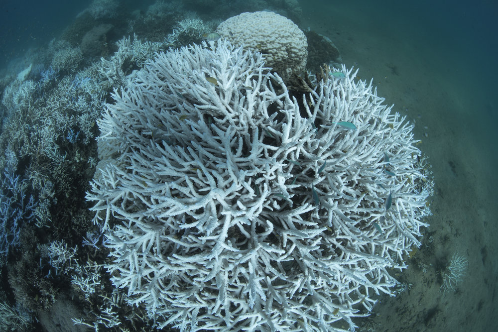NEW caledonia, mar 2016 credit: the ocean agency / xl catlin seaview survey