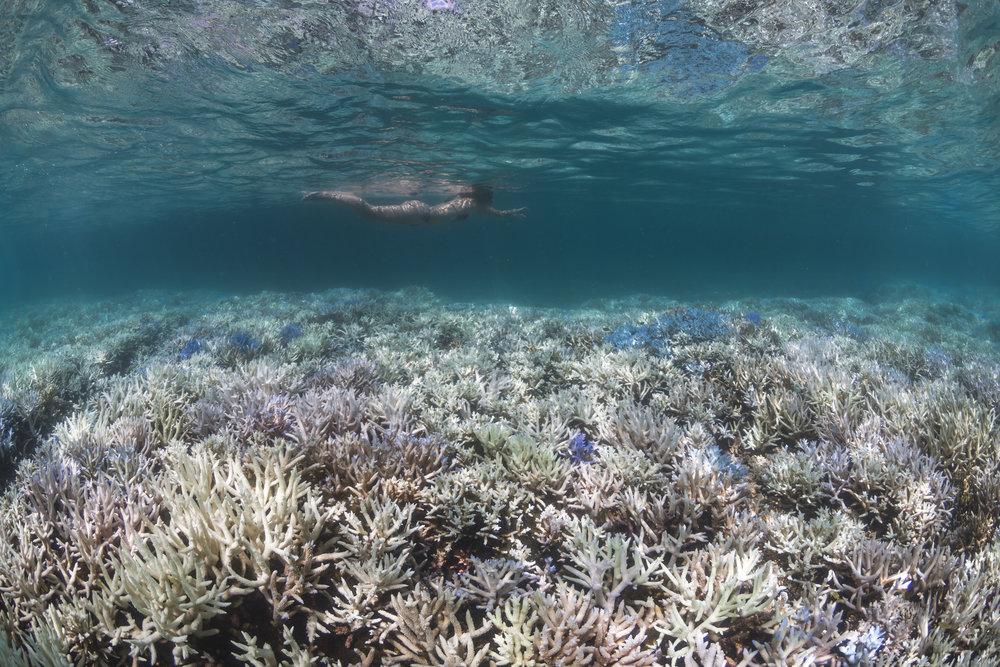 new caledonia credit: the ocean agency / xl catlin seaview survey