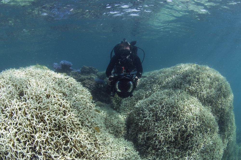 great barrier reef, feb 2017 credit: the ocean agency