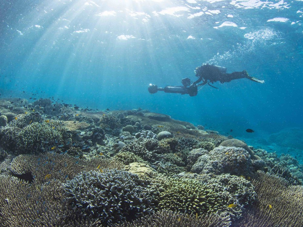 11 - A surveyor captures footage of the corals CREDIT: The Ocean Agency / paul g. allen philanthropies