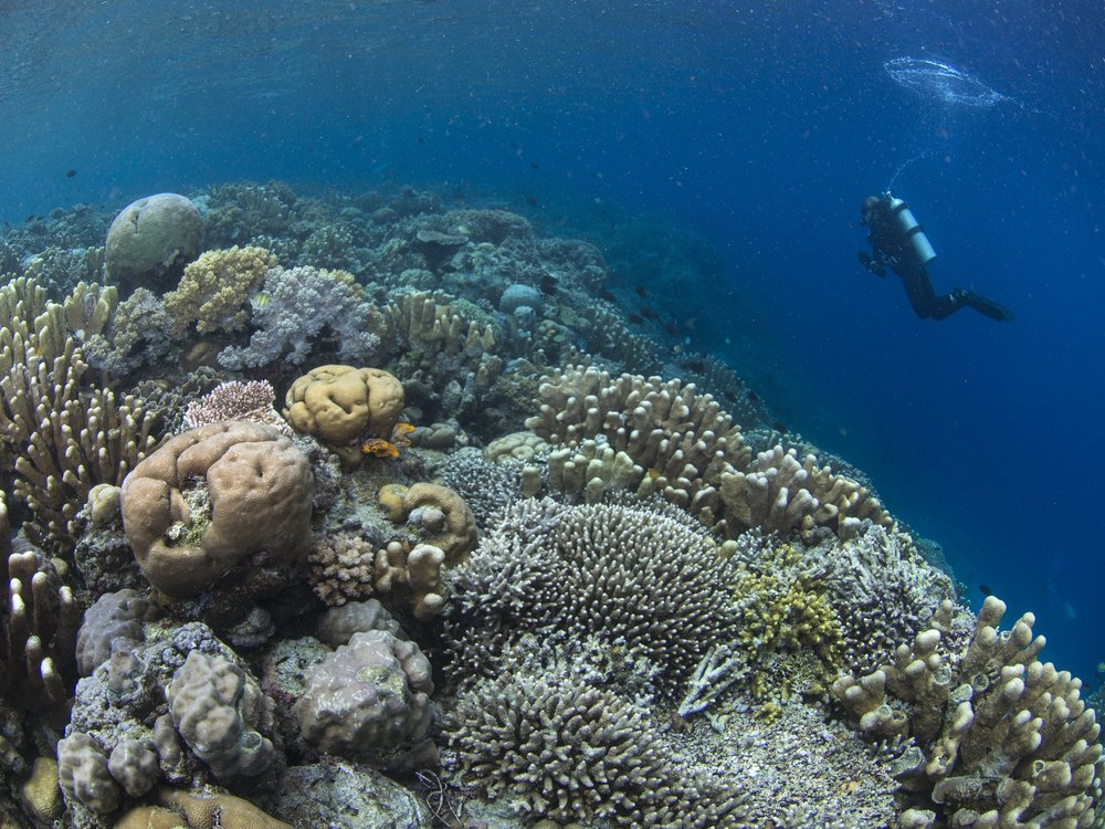 08 - A diver swims among healthy corals CREDIT: The Ocean Agency / paul g. allen philanthropies